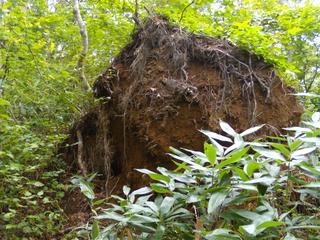 倒木によって開いた穴