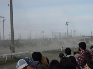 砂ぼこりを立てながら走る馬たち