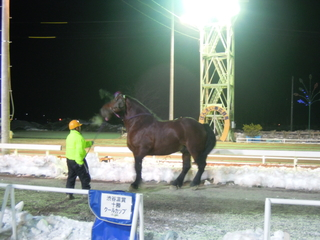 第9レース 優勝馬 サクラリュウ号